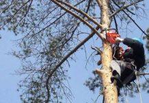 В Белове погиб рабочий после падения с дерева