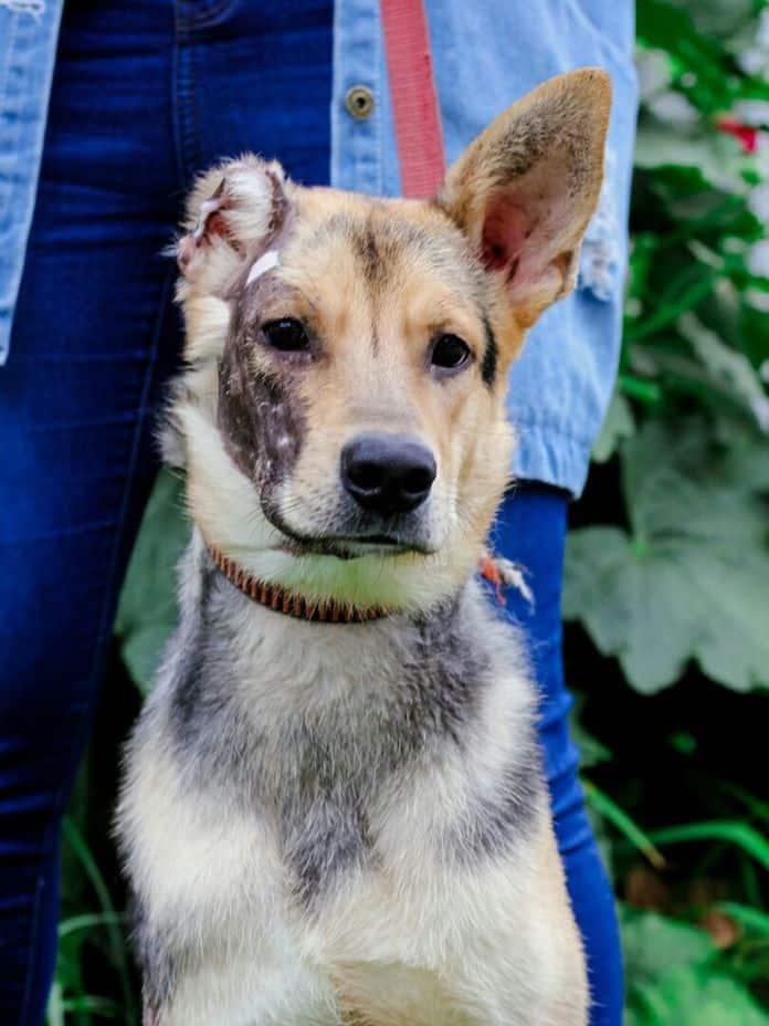 Новокузнечанин поджег собственную собаку