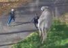 В Кемерове два слона сбежали из цирка