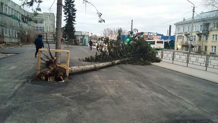 Ветер сломал дерево на Кузбассрадио. Последствия урагана в Белово, 28-29 октября 2018