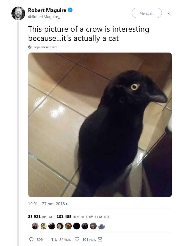 Оптическая иллюзия с котом вороном