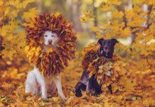 Осень, собака