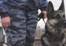Полицейская собака