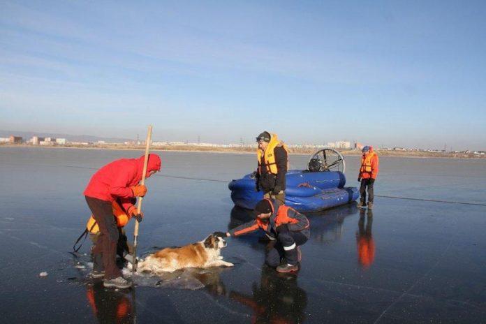 В Забайкалье спасли собаку вмерзшую в лед