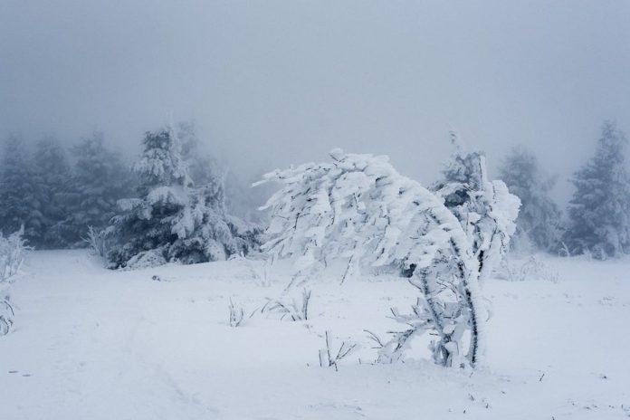 Снег, зима, метель