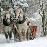 Зима, лес, упряжка, кони