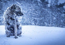 Метель, буран, собака, зима