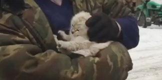 В Кузбассе котенок проехал 250 км под капотом из Кемерово в Тисуль