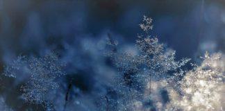 Мороз, зима, лед, снег