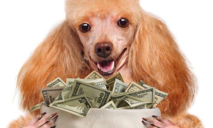 Собака, деньги