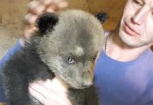 Беловчане нашли в тайге осиротевших медвежат