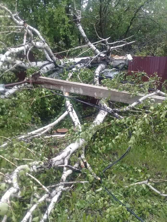 В Грамотеино ураган повалил дерево, 30 мая 2019 г