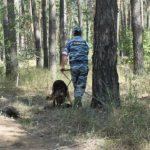 Полиция, розыск, собака, служебная собака