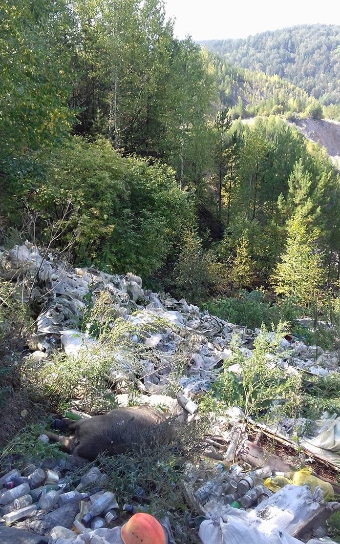 Стихийный скотомогильник в Беловском районе
