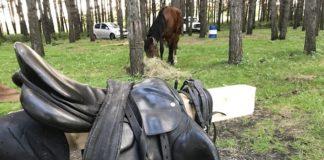 Первый всекузбасский конный ход в Старобачатах, 9 сентября 2019