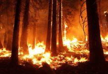 Пожар в лесу, огонь, природа