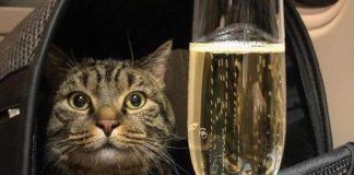 В Шереметьево растолстевшего кота не пустили в самолет