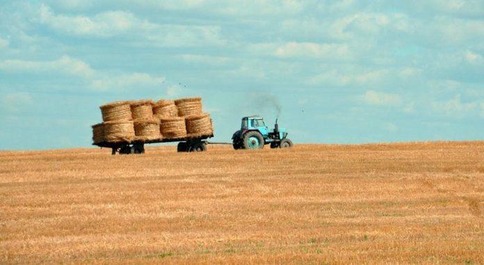 Трактор, сенокос, сельское хозяйство