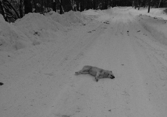 Массовое убийство собак в Новокузнецком районе, 27 января 2020 г