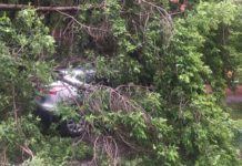 В Новом Городке дерево рухнуло на машину. Последствия урагана в Кузбассе, 26 мая 2020 г