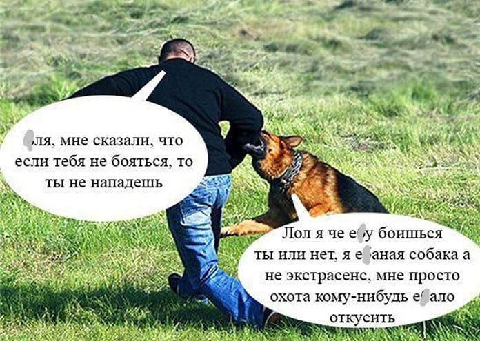 Собака, животные, нападение