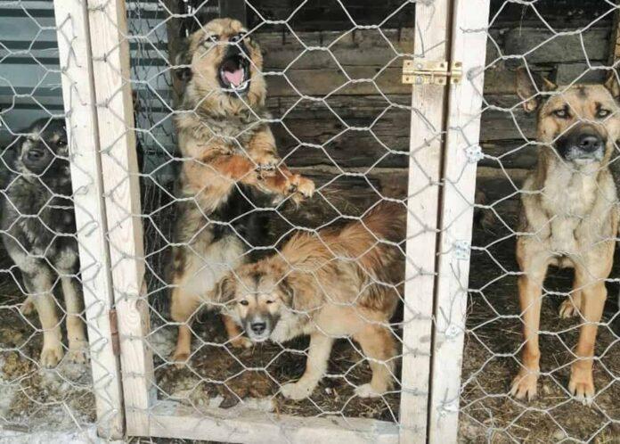 Бродячие собаки в отлове, Белово, Чертинский