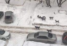 Бродячие собаки во дворе многоквартирного дома