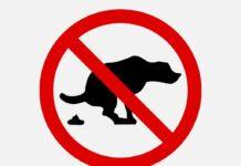 Собака, запрет